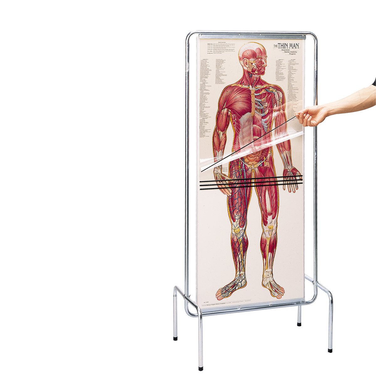 Explore the human body layer-by-layer by peeling away transparent ...