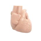 Replacement heart for patient care training manikin, 1020719 [XP031], Replacements